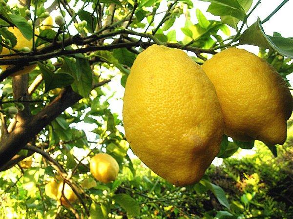 detersivi fatti in casa ai limoni