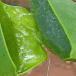 Rimedi Naturali a base di Aloe Vera