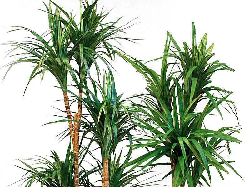 Piante da appartamento piante e arbusti - Piante verdi interno ...