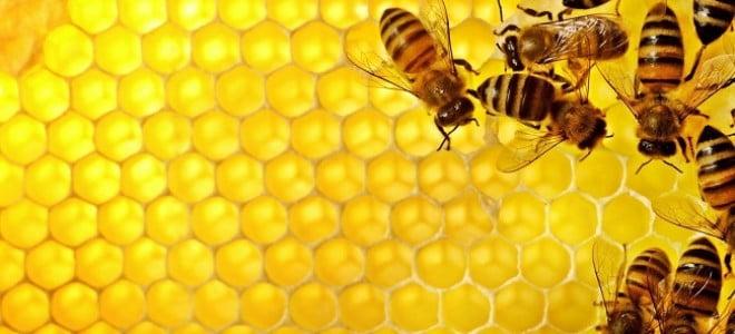 cera-api-rimedinonna