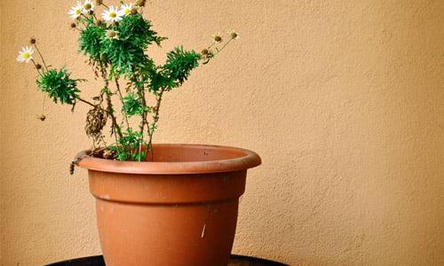 Come innaffiare le piante da interni rimedi della nonna for Innaffiare aloe vera