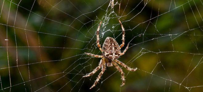 come-sbarazzarsi-ragni-casa-giardino