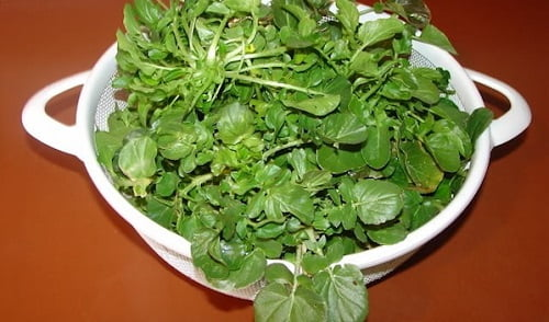 Il crescione non sempre viene usato nelle diete dei bambini, ma dovrebbe.