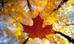 lavori-autunno-rimedinonna