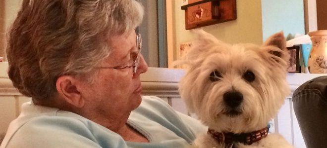 nonna-animale-domestico