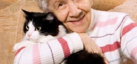 animale domestico gatto in casa