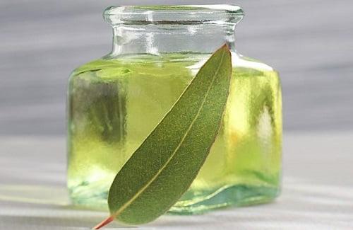 olio di eucalipto, i migliori rimedi della nonna