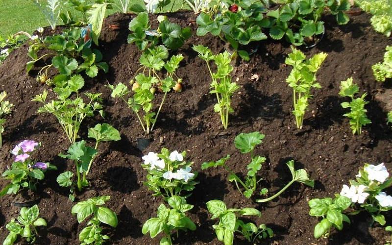 Come fare l 39 orto in giardino da dove iniziare rimedi della nonna - L orto in giardino ...
