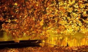 ottobre-rimedinonna