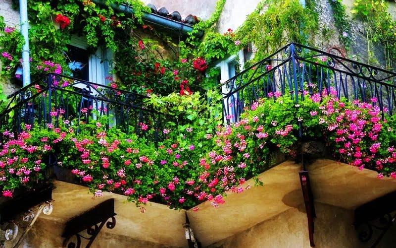 Come scegliere le piante per il balcone