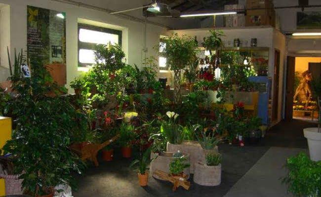 Ecco quali sono le piante da interno per depurare l'aria