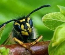 rimedi-miele-insetti-rimedinonna