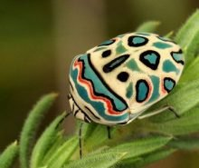 rimedi-naturali-insetti