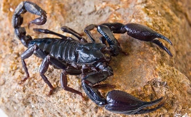 Come allontanare gli scorpioni da casa