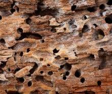 Rimedi naturali per le termiti