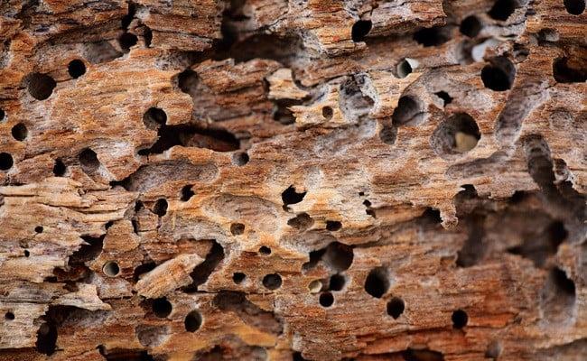Rimedi naturali per sbarazzarsi delle termiti