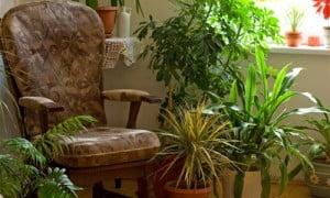 rimedi-nonna-piante