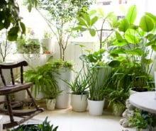 rimedi-nonna-piante-casa