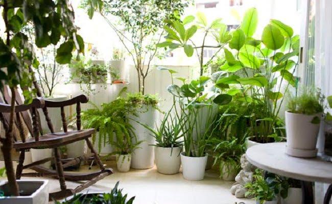 Fiori e piante rimedi della nonna per il verde in casa for Creatore della pianta della casa