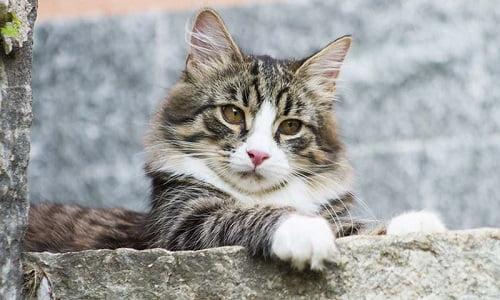 stitichezza nei gatti? prova i rimedi della nonna