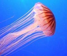 rimedi-punture-medusa