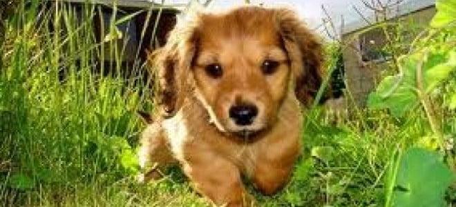 rimedi-zecche-cani
