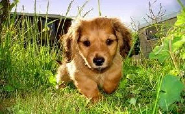 Rimedi naturali contro le zecche dei cani rimedi della nonna for Rimedi naturali contro le formiche bicarbonato