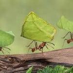 La Nonna Risponde: rimedi naturali per le formiche in casa