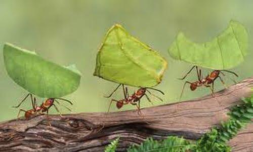 la nonna risponde: rimedi naturali per le formiche in casa ... - Eliminare Formiche In Cucina