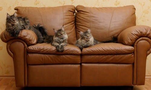 l'odore di urina del gatto ti disturba e non sai come toglierlo? Usa i rimedi della Nonna!